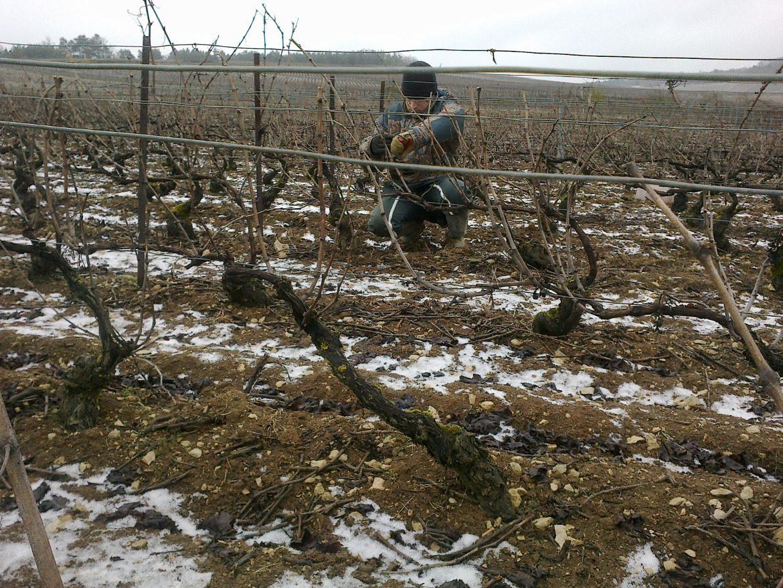 Preparing Vines