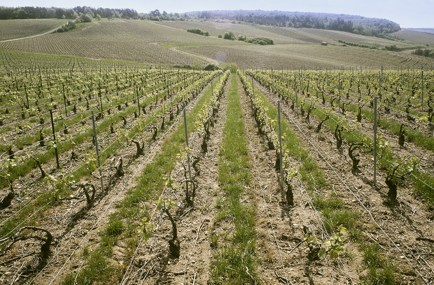 French Wine Vine Rows