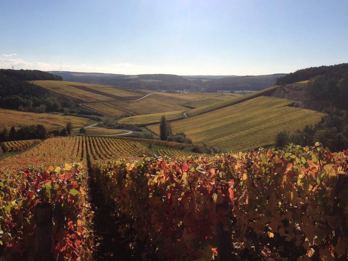French Wine Vineyard Rolling Hills
