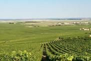 Champagne Vineyard Fields View
